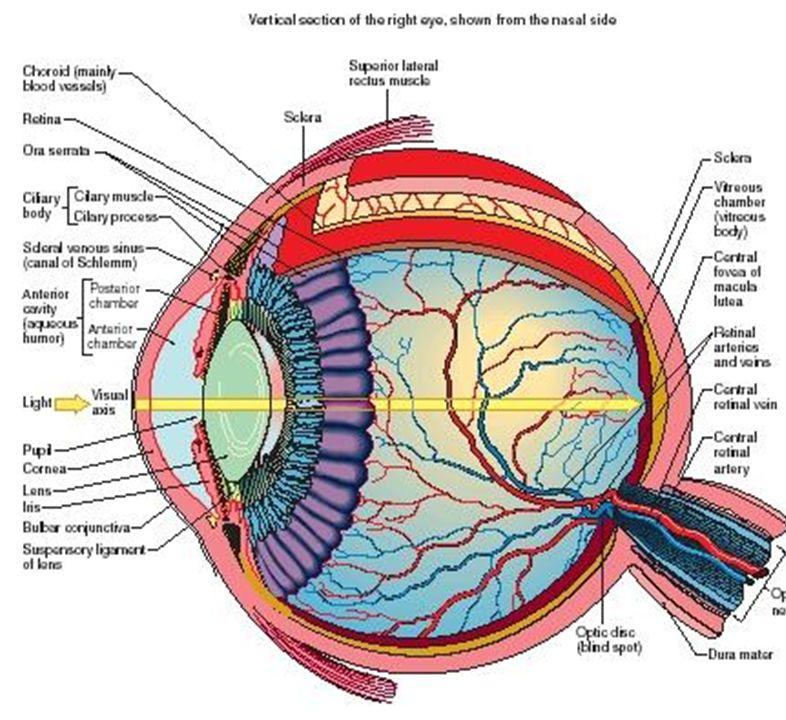 Ухудшение зрения после 40 лет лечение