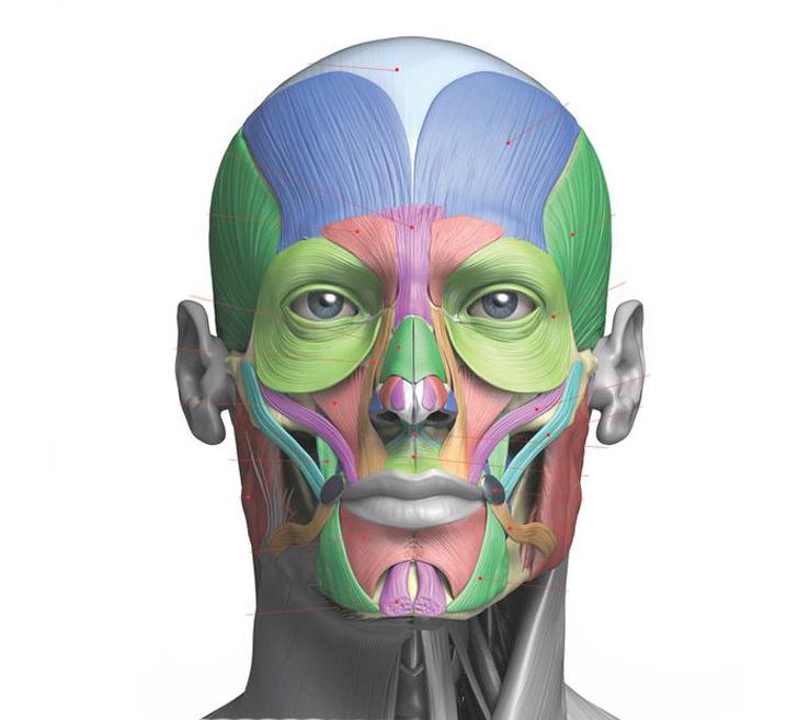 Что такое тризм и как его лечить? Причины и лечение напряжения в мышцах челюсти: как расслабить мускулатуру с помощью упражнений и физиопроцедур