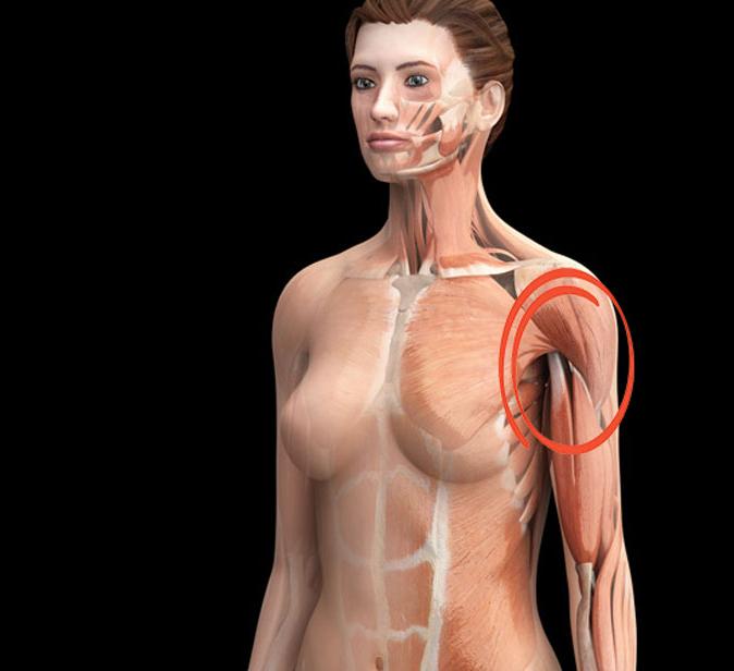 Тренажеры для похудения рук