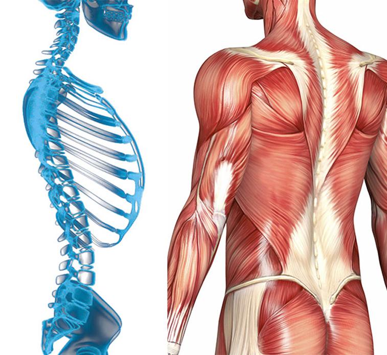 Зарядка для ленивых: похудение в постели для живота и тела