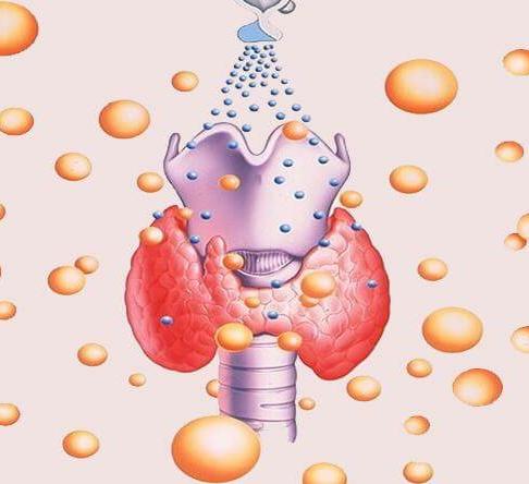 Тиреотропный гормон: Что это такое и за что отвечает