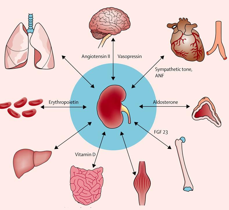 Почки симптомы болезни и лечение, психосоматика
