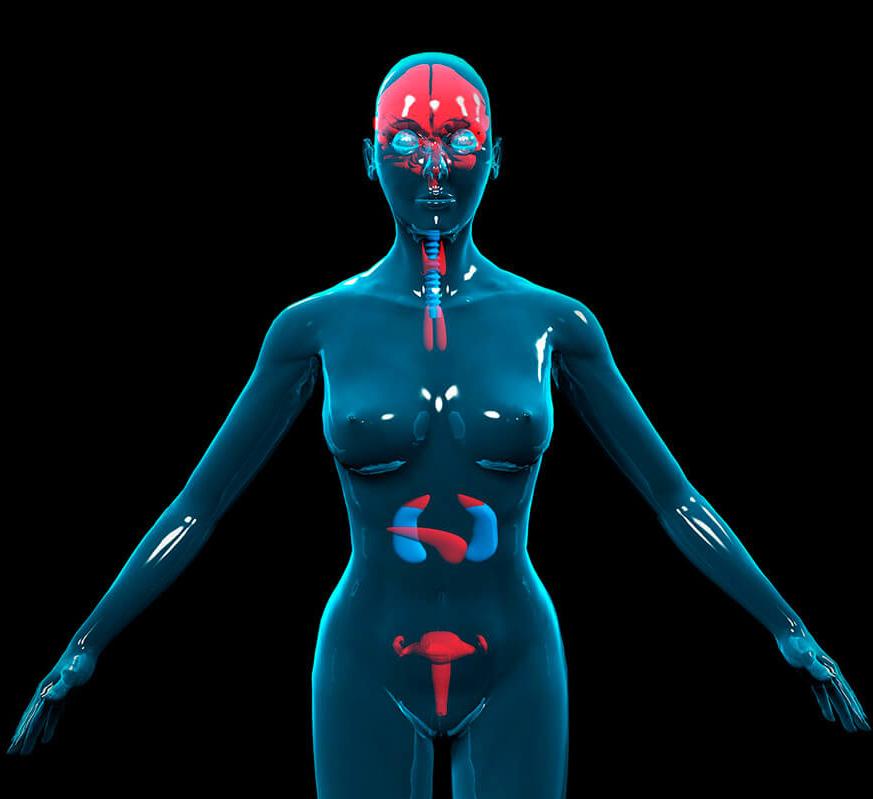 Нервная и эндокринная система