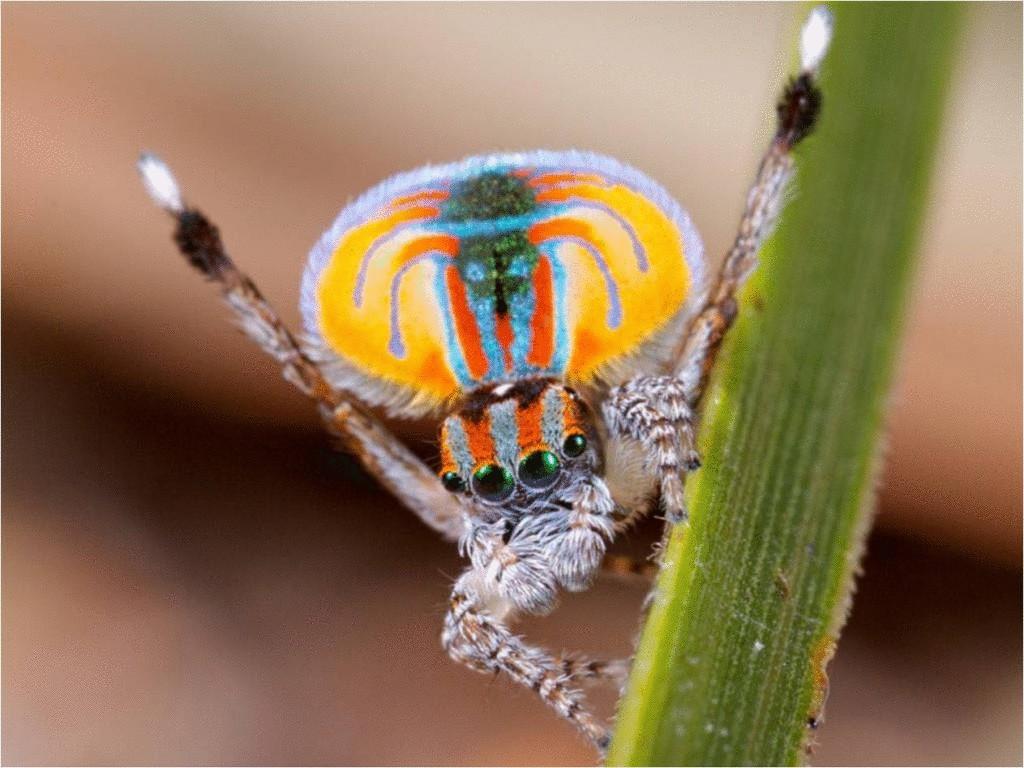 согласился, картинки экзотический паук родственные