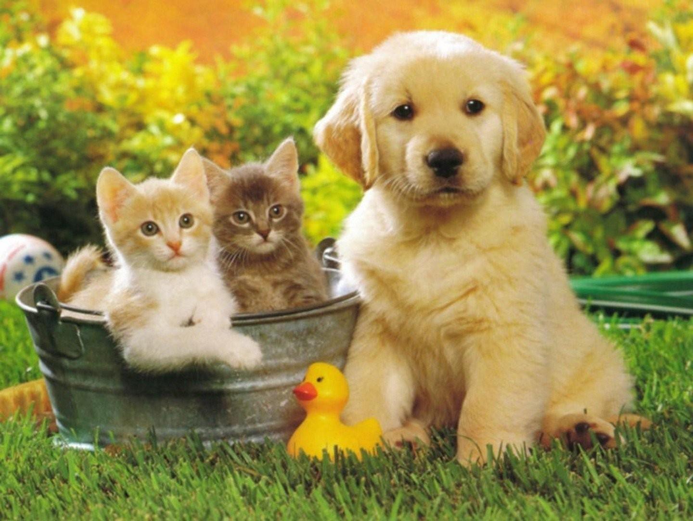 песня даже картинки для рабочего стола с домашними животными всего может