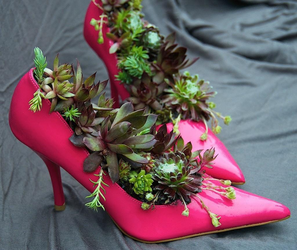 цветок в ботинке фото таких условиях