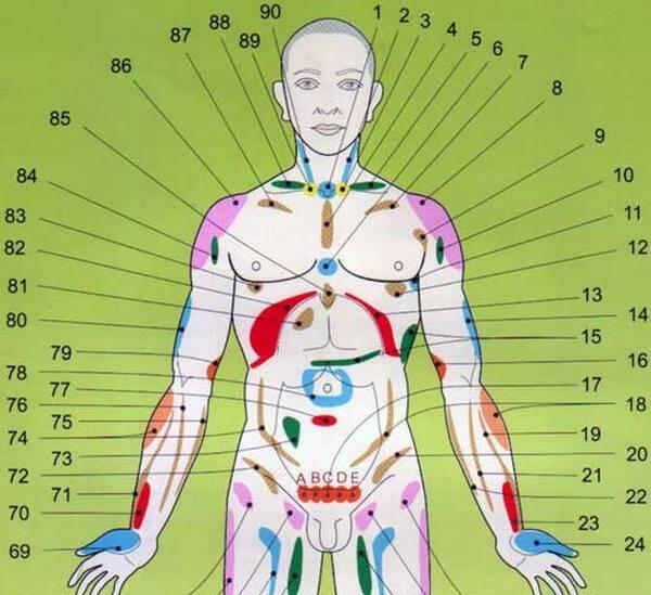 Внутренние органы человека схема расположения со спины