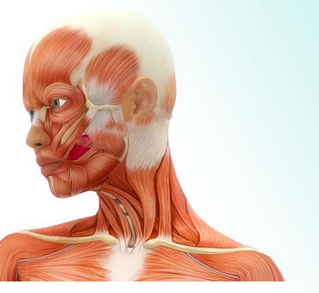Аскорбиновая кислота в косметологии