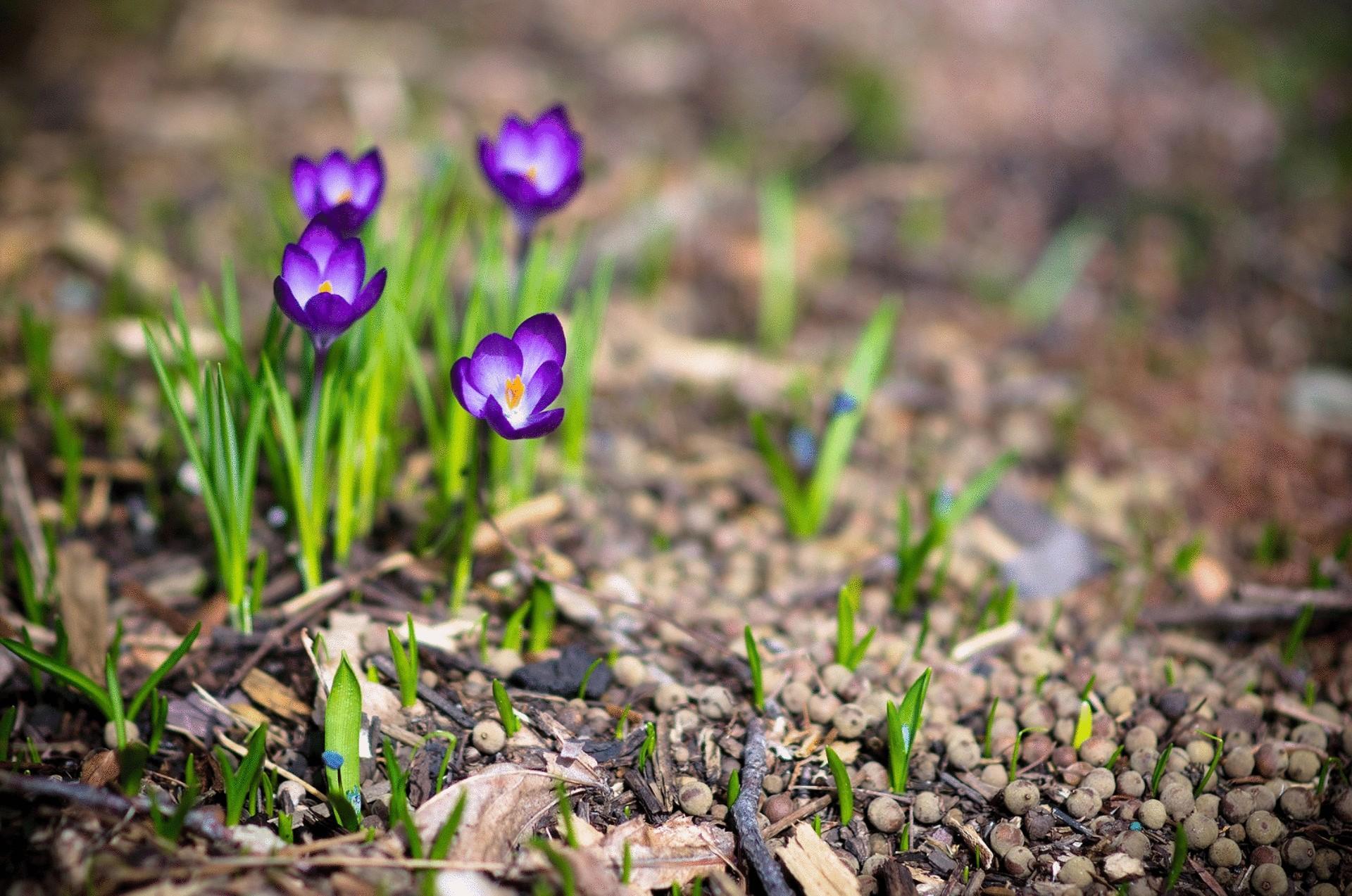 природа фото весна.