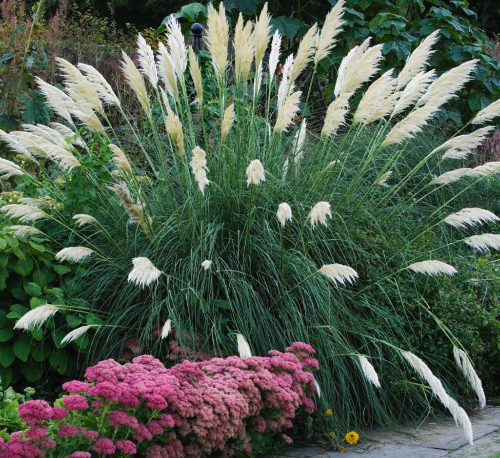 трава для купания от аллергии