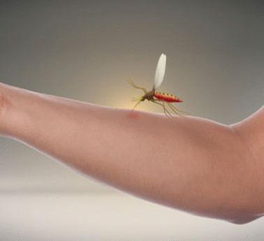 натуральное средство от паразитов для человека