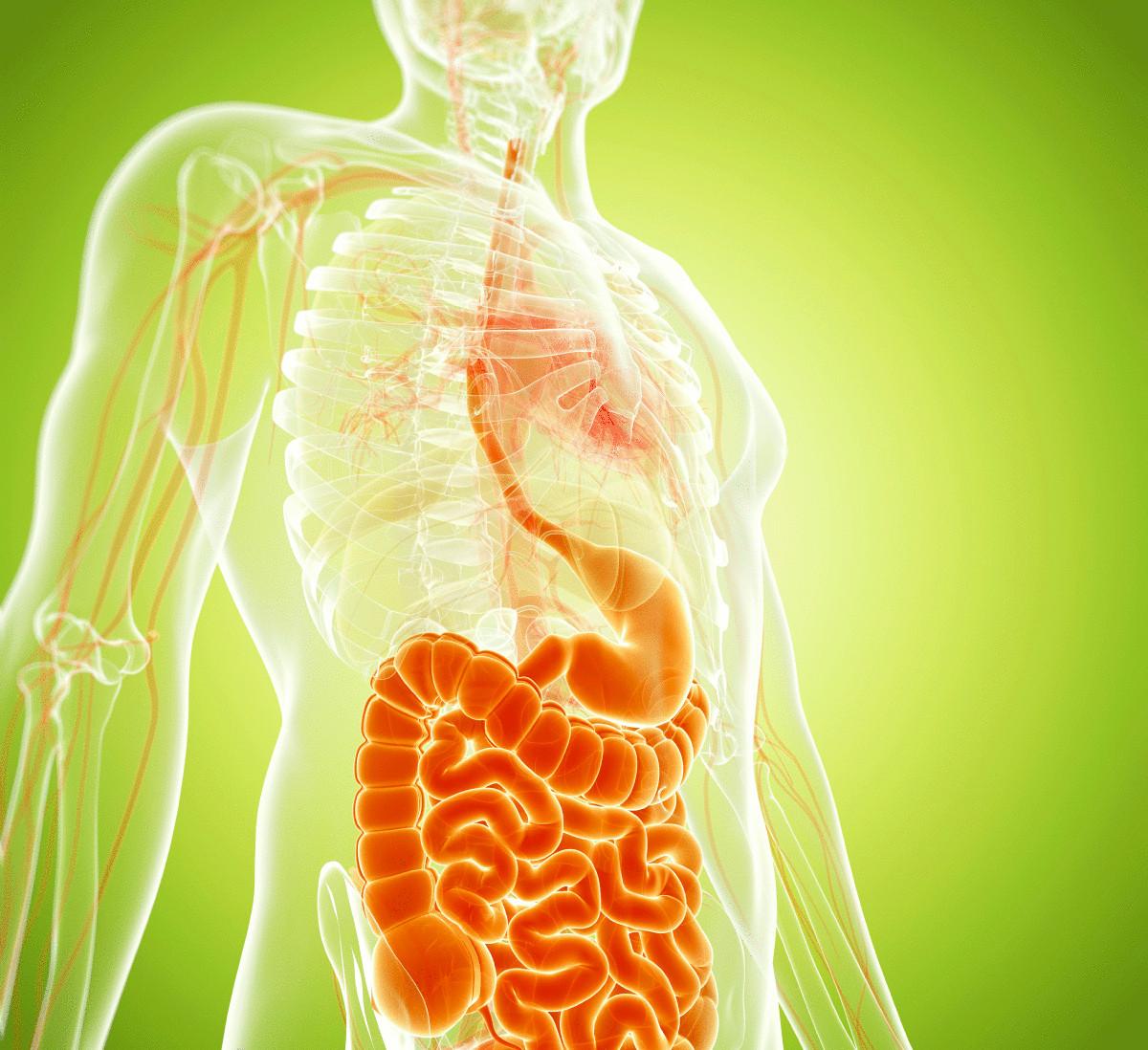 Диета при дивертикулезе кишечника: что можно и нельзя есть