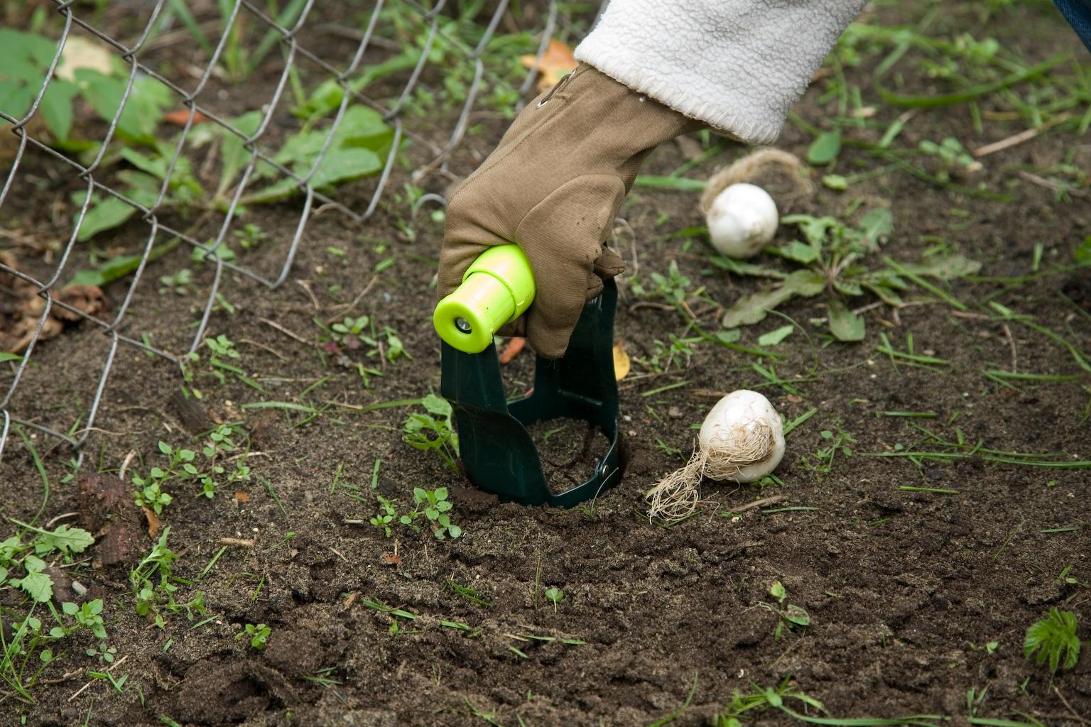 Что сажать осенью на даче: 7 советов огородникам (38 фото) 17