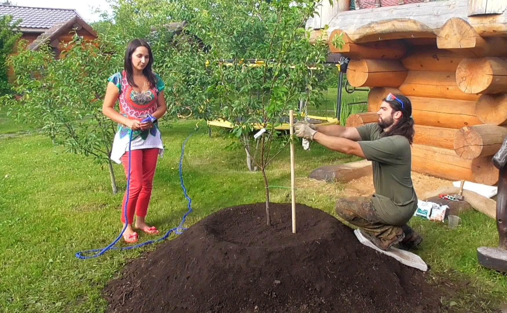 Плодовый сад как обеспечить себя богатыми