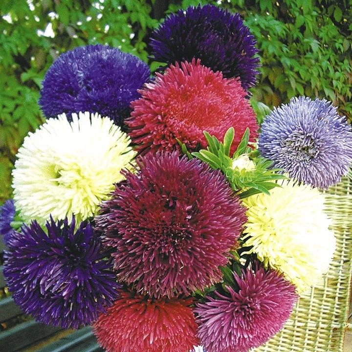 Какие цветы можно сажать в открытый грунт семенами 75