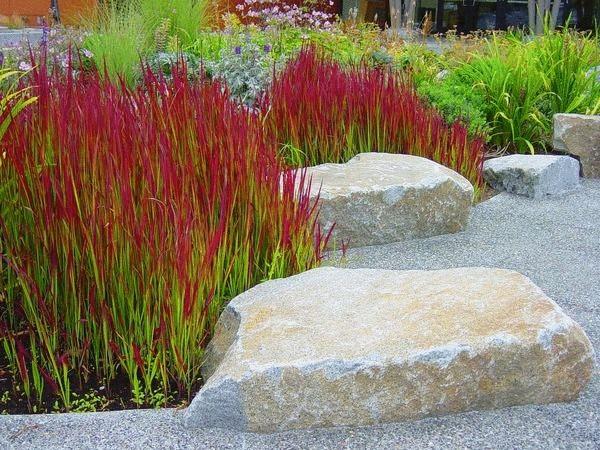 декоративные злаки - императа с камнями