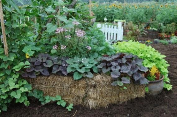 Органическое земледелие, пермакультура: грядки из соломенных тюков