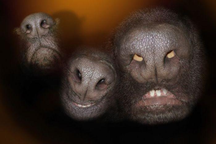 Силуэты странных животных.