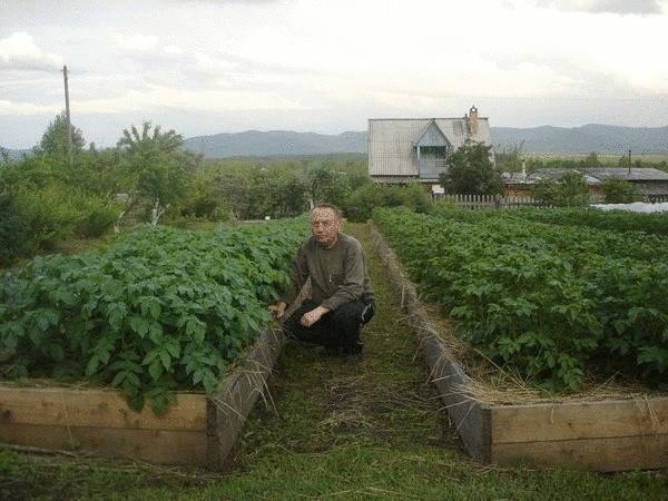 Посадка картофеля в