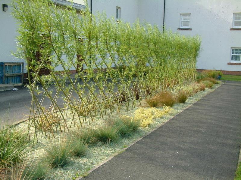 Конструирование изгороди из растущей ивы