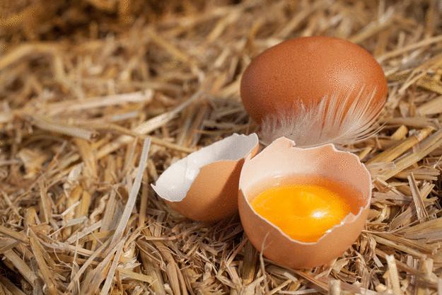 10 веских причин не выбрасывать яичную скорлупу