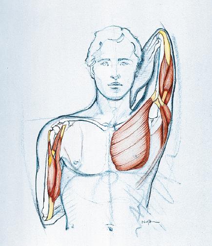 Ограниченная подвижность плечевого сустава защемило нерв в тазобедренном суставе к какому врачу