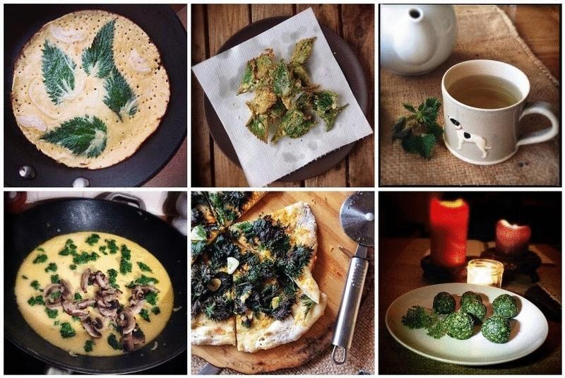 Рецепты из крапивы: вкусно и очень полезно