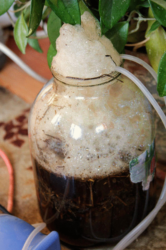 Как приготовить компостный чай