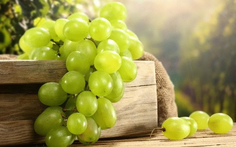 Интересный способ выращивания винограда