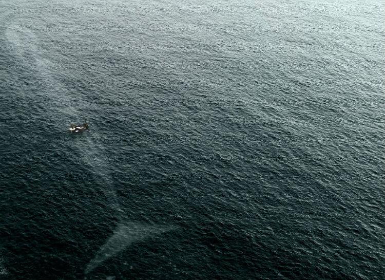 19 фото, после которых вам будет страшно заходить в воду