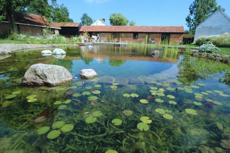 Пруд-купальня в саду: советы по созданию