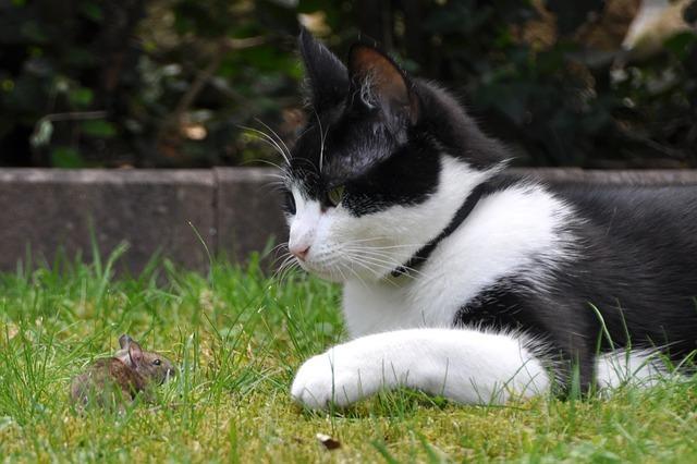 9 признаков, что ваша кошка любит Вас Original_1__econet_ru