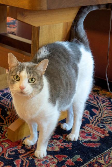 9 признаков, что ваша кошка любит Вас Original_7__econet_ru