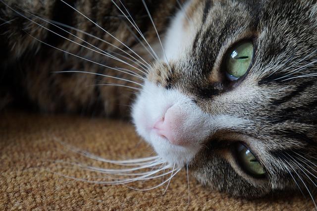 9 признаков, что ваша кошка любит Вас Original_8__econet_ru