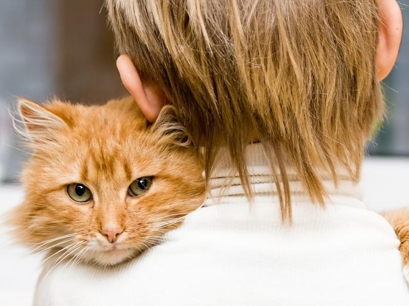 Анималотерапия или какие домашние животные признанные лекари