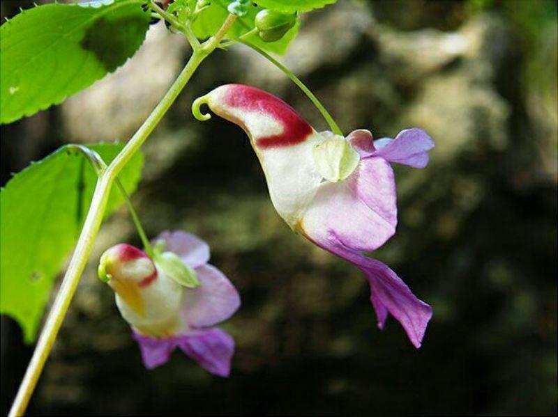 Картинки по Еапросу site:liveinternet.ru цветы южной америки