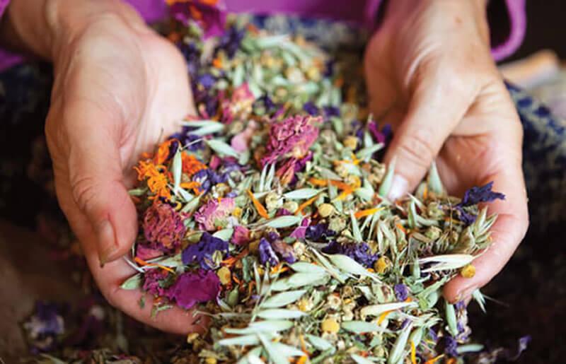 Травы в гинекологии — разновидности и лечение травами