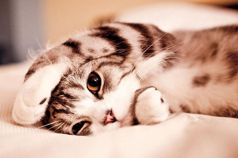 Почему кошка ложится на больное место человека