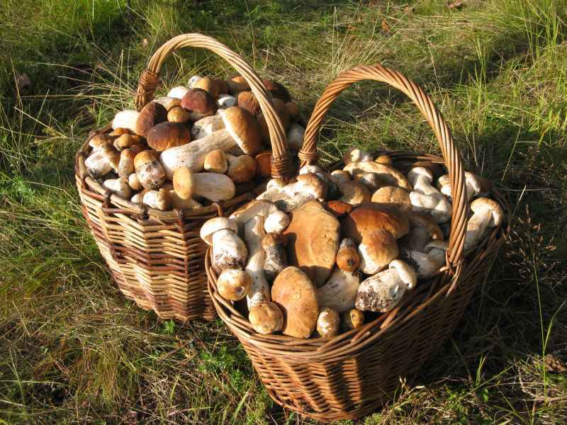 Картинки по запросу грибы в корзине фото