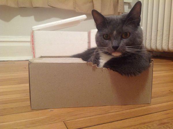 Почему кошки так любят коробки? Ответ найден!