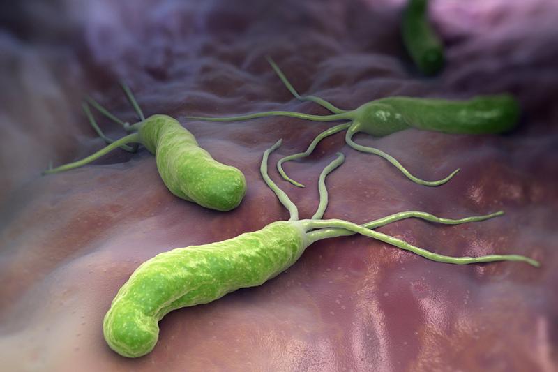 Хилари бактерии симптомы