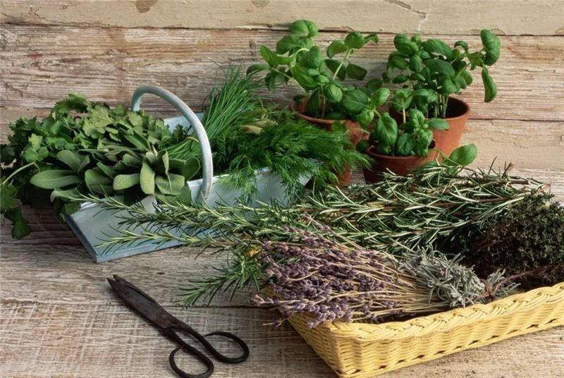 Шесть трав, которые снижают уровень гормона стресса кортизола