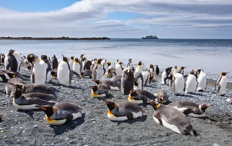Маккуори – крошечный зелёный остров, где правят пингвины - 2