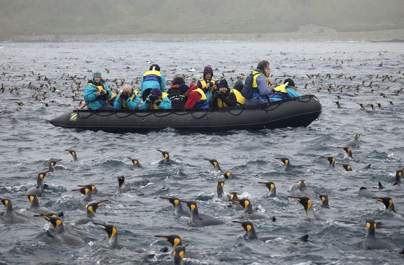 Маккуори – крошечный зелёный остров, где правят пингвины - 4