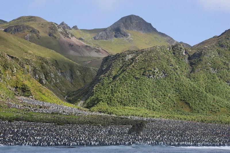 Маккуори – крошечный зелёный остров, где правят пингвины - 5