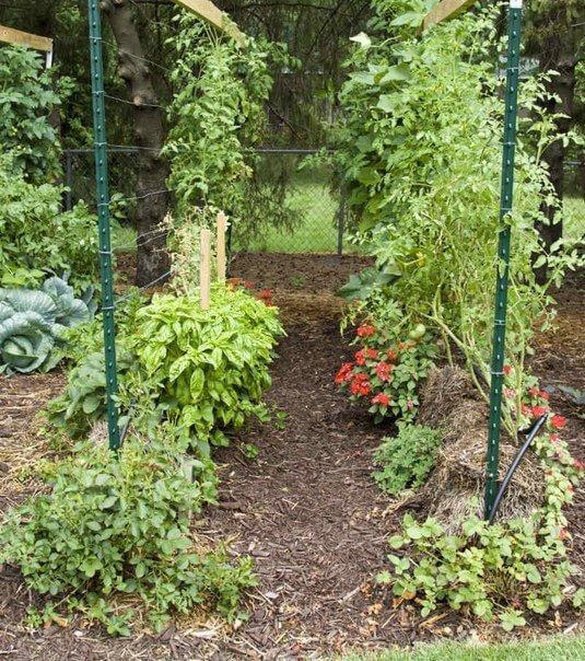 Солома идеально подходит для выращивания овощей