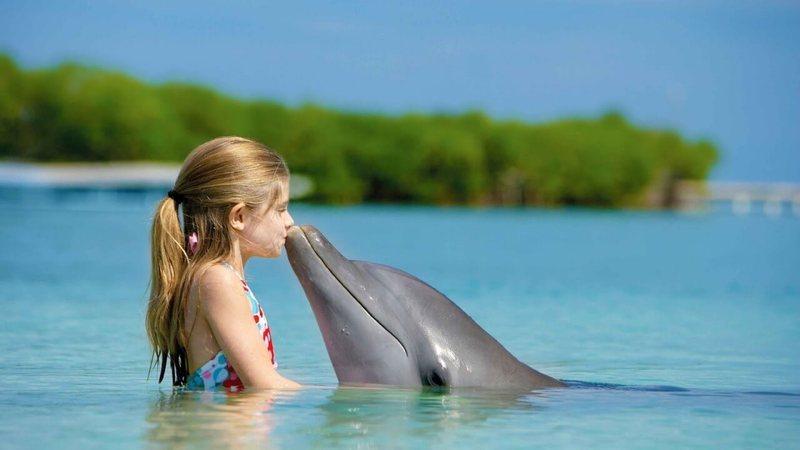 Обои на рабочий стол дельфины любовь