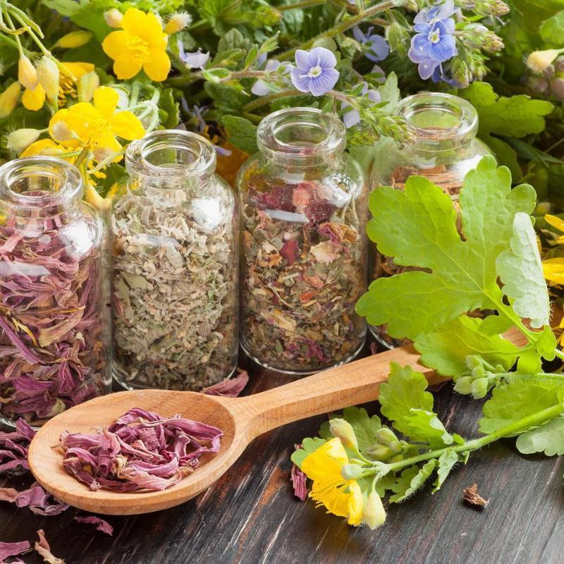 Лучшие противопаразитарные растения это необходимо знать!