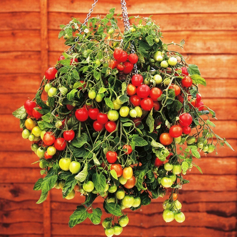 "Природа кормит "" природа в доме. огород на балконе. городски."