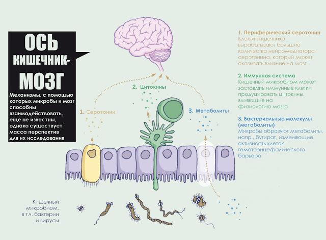 Картинки по запросу Невидимая ось: Как наш кишечник разговаривает с нашим мозгом